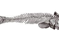 Fischgräte, Gelatine